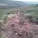 02.04.15 – Δενδροφύτευση στην περιοχή Καλοχωρίου-Παντειχίου