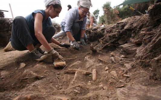 Μια απολιθωμένη μικρή ζούγκλα στη Β.Εύβοια