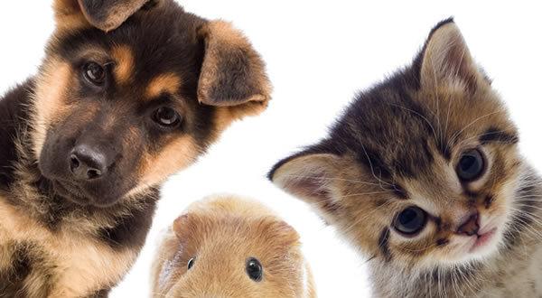 ΔΕΛΤΙΟ ΤΥΠΟΥ 2016 Πανελλήνιου Κτηνιατρικού Συλλόγου