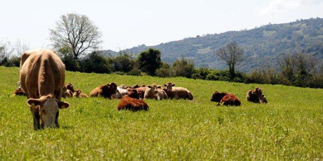 Νέα ηλεκτρονική εφαρμογή για τους κτηνοτρόφους